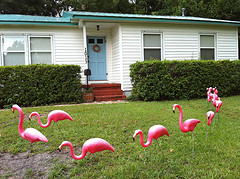 Different fundraising with flamingo flocking